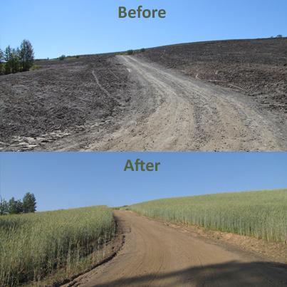A Story of Restoration