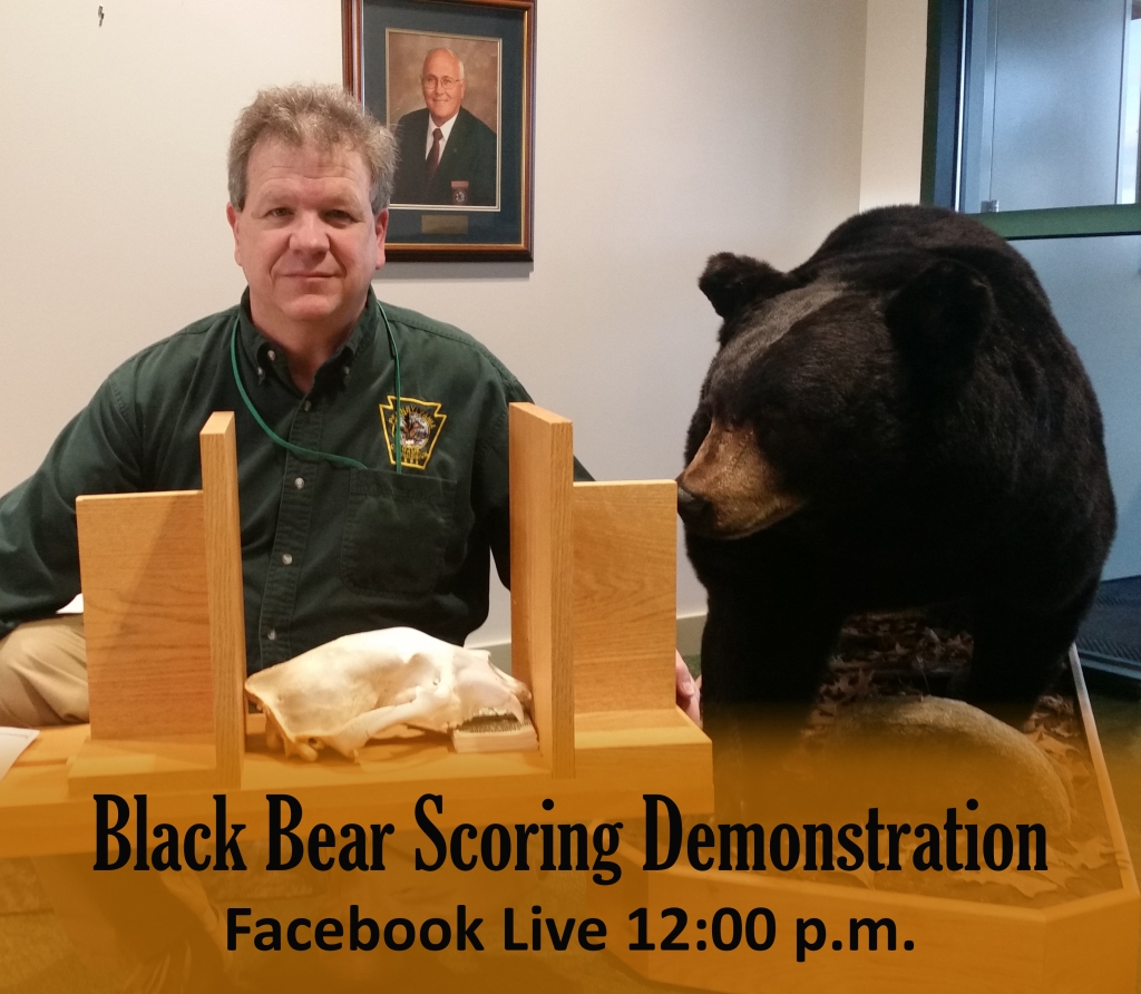 bear-scoring-promo