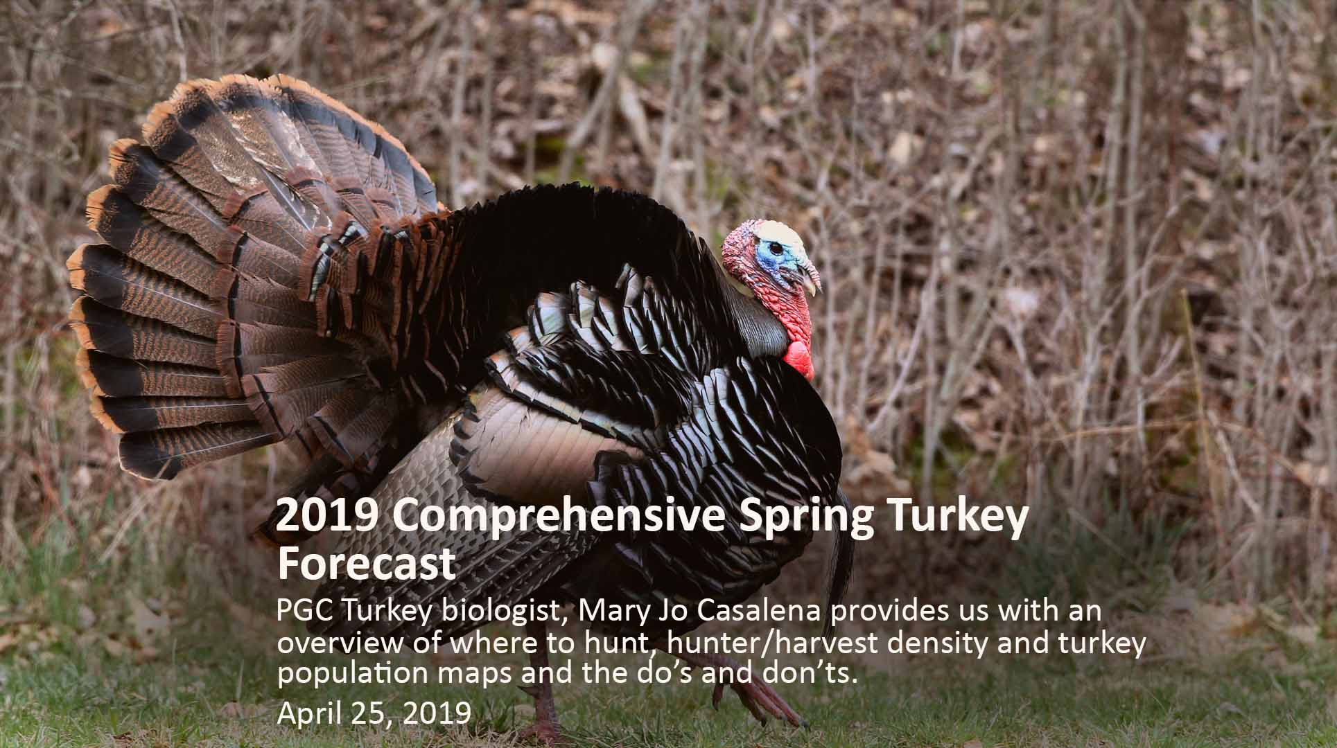 Spring Gobbler Season Pa 2020.Spring Gobbler Season 2019 Forecast Hunt Wild Pa
